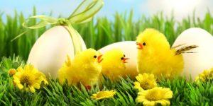 (Afgelast) Eierenzoeken & Tikken op de dorpsbleek @ Dorpsbleek Losser